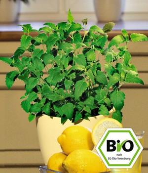 bio kr uter pflanzen jetzt online kaufen bei baldur garten. Black Bedroom Furniture Sets. Home Design Ideas