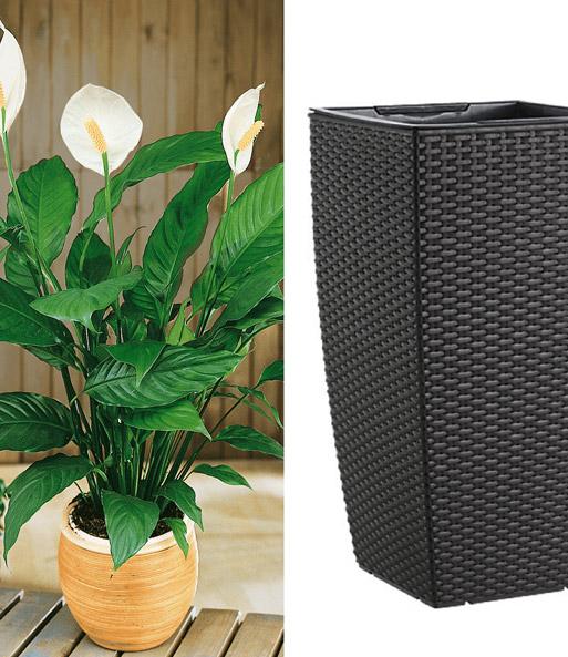 Einblatt emsa casa mesh s ule bl hende zimmerpflanzen for Hydrokultur shop