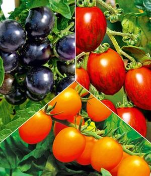 Tomaten Pflanzen Online Kaufen Bestellen Bei Baldur Garten
