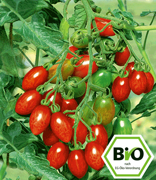 BIO-Kirschtomate 'Trilly' F1