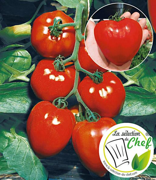 veredelte herz tomate fleurette f1 1a qualit t baldur garten. Black Bedroom Furniture Sets. Home Design Ideas