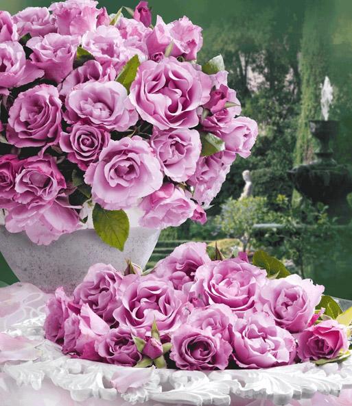 Parfum-Rose 'Dioressence®': 1A-Rosenpflanzen Bestellen | Baldur-Garten