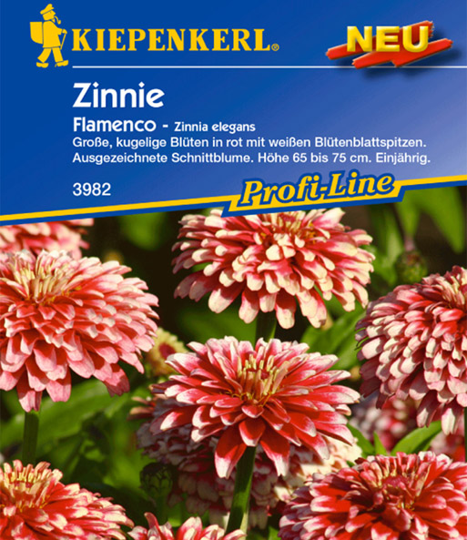 Zinnie 'Flamenco'