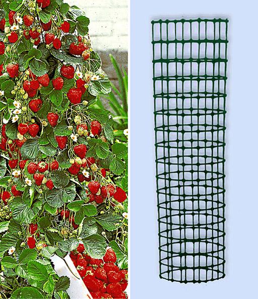 kletter erdbeere 39 hummi 39 und dekor erdbeeren bei baldur garten. Black Bedroom Furniture Sets. Home Design Ideas