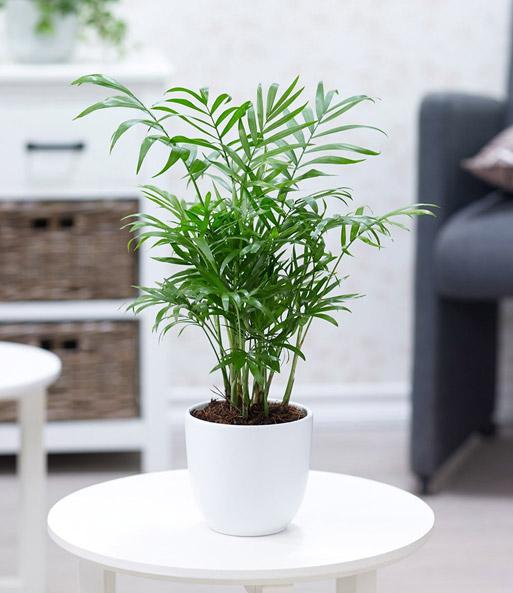 zimmerpflanzen mix 39 fresh air 39 luftreinigende pflanzen. Black Bedroom Furniture Sets. Home Design Ideas