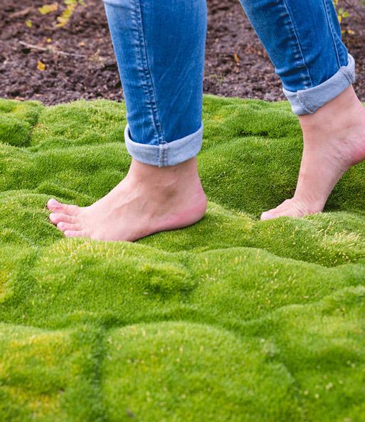 Moos Forest Dream®: Top-Pflanzen Kaufen | Baldur-Garten