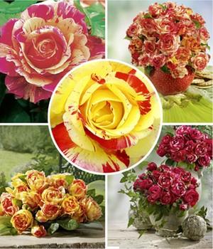Blumen Online Günstig Kaufen über Shop24at Shop24