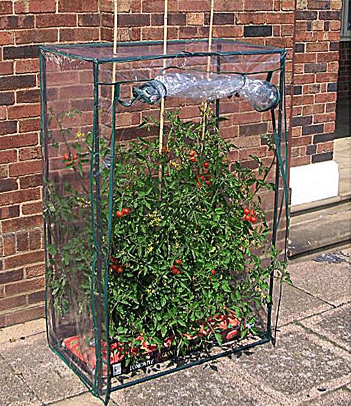Tomaten Gewachshaus Jetzt Online Kaufen Baldur Garten