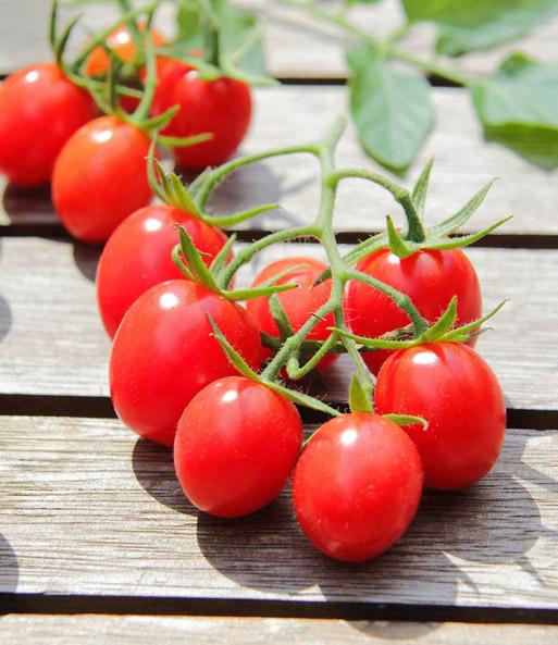 tomaten kollektion jetzt online kaufen baldur garten. Black Bedroom Furniture Sets. Home Design Ideas