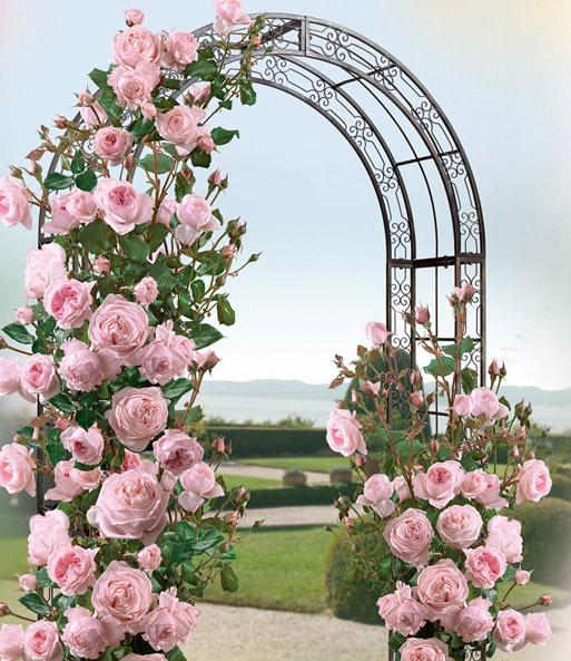 Rosenbogen Jamarie: Jetzt online kaufen | BALDUR-Garten