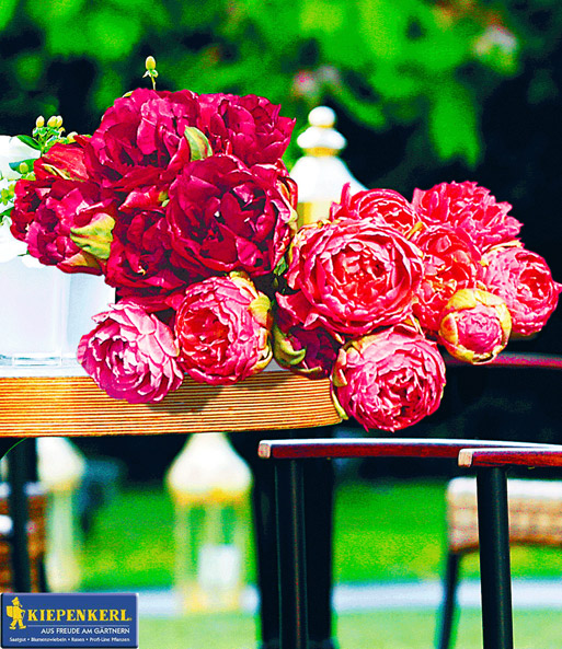 ROSEN-Tulpen-Raritäten | Tulpen bei BALDUR-Garten