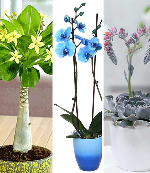 Zimmerpflanzen Mix Bluhende Liebli Bluhende Zimmerpflanzen Bei