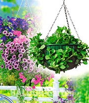 Hanging-Basket