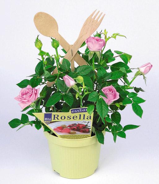 Essbare rosenbl ten rosa rosen bei baldur garten for Essbare dekoration