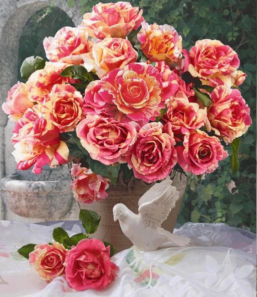 Maler-Rose® \'Claude Monet®\' | Strauchrosen bei BALDUR-Garten