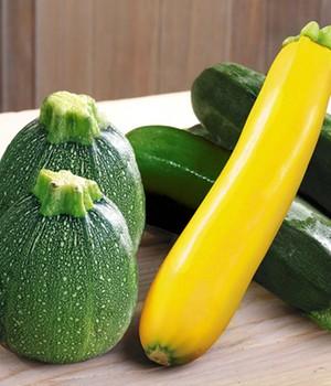 zucchini jetzt online kaufen bei baldur garten. Black Bedroom Furniture Sets. Home Design Ideas