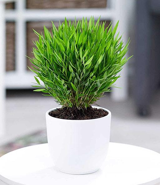 zimmerpflanzen mix 39 exotisch 39 zimmerpflanzen a z bei baldur garten. Black Bedroom Furniture Sets. Home Design Ideas