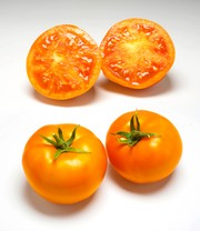Tomate 'Yellow Gold' F1