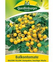 Tomate 'Balconi Yellow'