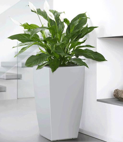 EMSA® CASA BRILLIANT Säule 57 cm ho | Pflanzkübel bei BALDUR-Garten