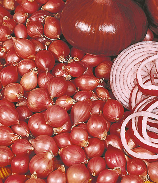 rote steckzwiebeln 39 red baron 39 steckzwiebeln knoblauch bei baldur garten. Black Bedroom Furniture Sets. Home Design Ideas