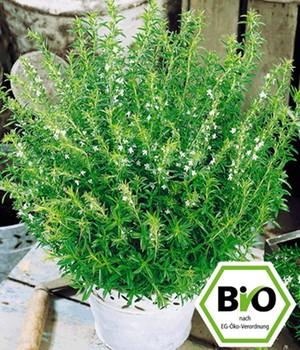 bio kr uterpflanzen online kaufen bestellen bei baldur. Black Bedroom Furniture Sets. Home Design Ideas