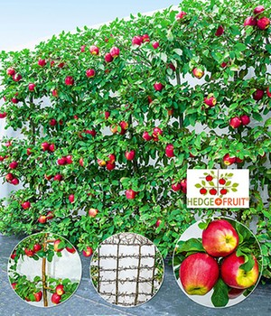 6er Apfel-Hecke 'HEDGE+FRUIT®' Gala