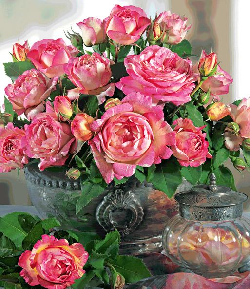 kletter rose 39 bienvenue 39 rosa rosen bei baldur garten