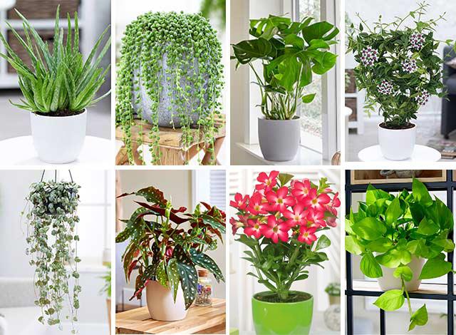 Pflanzenwelt Bei Baldur Online Kaufen Bestellen